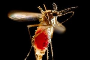 zika2-300x200 - The Zika Virus: Prevention is the First Line of Defense